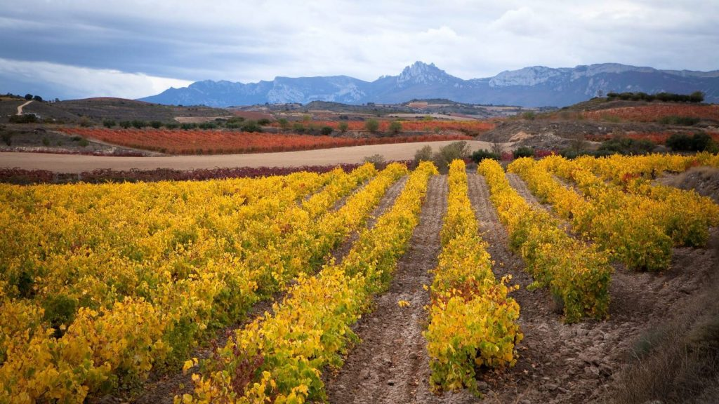 European grants for the wine-making sector