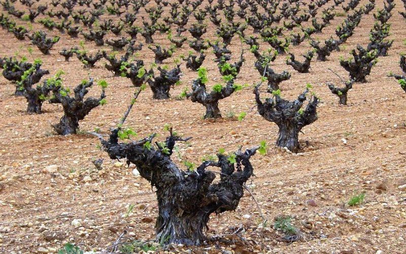 Venta de bodegas de vino ecológico