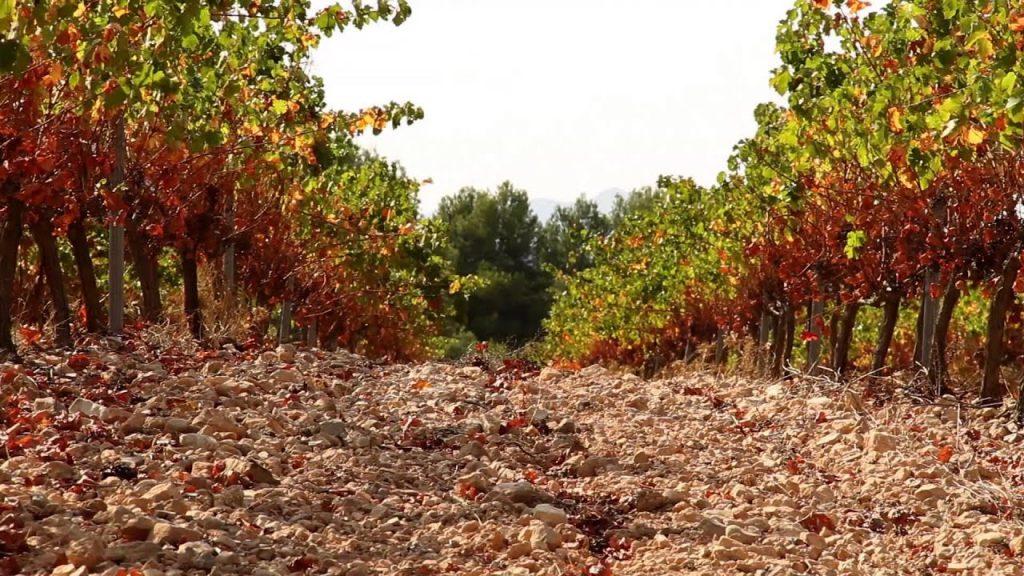 Weinberge in Terres dels Alforins zu verkaufen