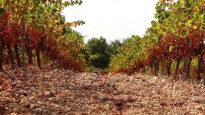 Valencianische Weine haben Parkers Aufmerksamkeit