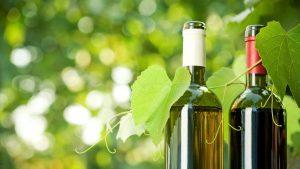 Grape Harvest in Spain: Forecast for this 2019 Season