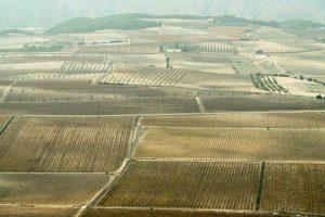 El vino en la Comunidad Valenciana